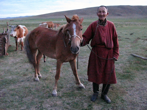 a grandfather with a horse and some cows in a field in Mongolia