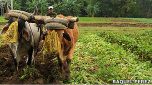 Campesino en Cuba - Foto: Raquel Pérez