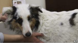 Los perros ayudan a familias con autismo