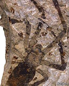 Fósil de araña