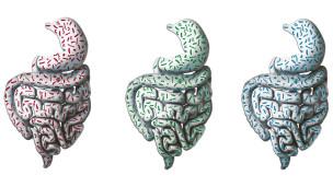 Tres tipos de flora intestinal (EMBL)