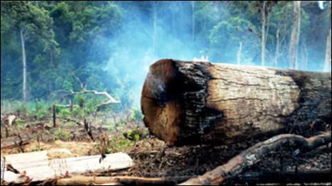 Rừng Đăk Nông bị tàn phá