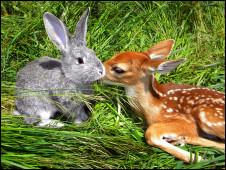 O veado Bambi com o coelho Ben