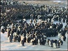 Imagem de grupo de pinguins imperadores feita por cientistas