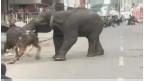 فيلان بريان يبثان الرعب في قلوب سكان مدينة هندية