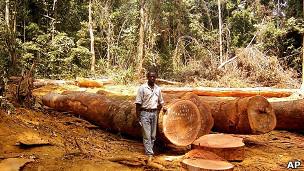 El bosque tropical africano, más resistente al cambio climático 110610131132_africa_land_forest_304x171_ap