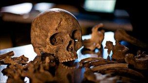 cráneo en Herculano