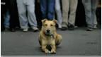 كلب يوناني وفي للمتظاهرين