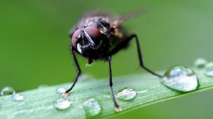 دراسة واعدة للحشرات