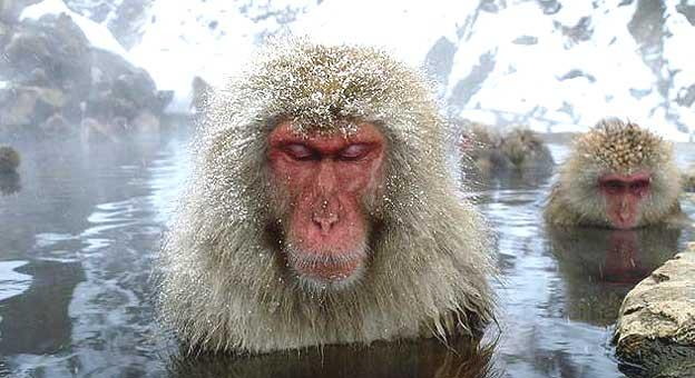 Macacos Foto: Yukihiro Fukuda