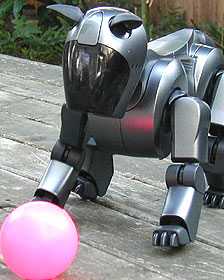 Perro robot Aibo Foto gentileza Peter Kahn