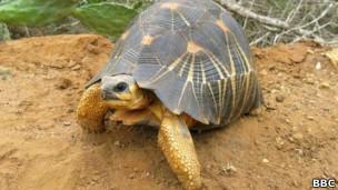 Tartaruga natural do Oceano Índico (BBC)