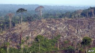 Desmatamento na Amazônia (Pará) / AFP