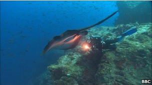 Mergulhador no Oceano Pacífico (BBC)