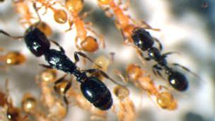 В муравьином царстве зафиксированы восстания рабов.