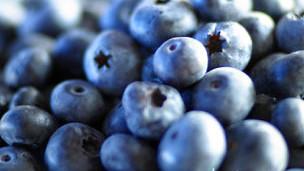 Arándanos azules (mortiños)