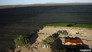 Plantación de marihuana en Baja California