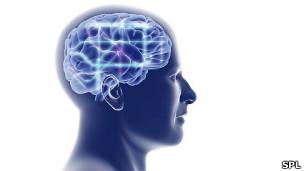 Ilustración de un cerebro humano