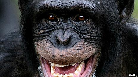 Низкокалорийная диета не продевает жизнь приматам
