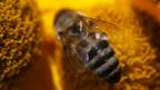 learning english, hong kong bee hive