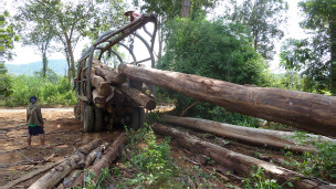 Chất gỗ lên xe ở Sekong, Lào (ảnh của EIA)