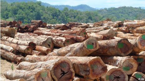 Gỗ tập trung tại Atapeu, miền Nam Lào, để chuyển sang Việt Nam