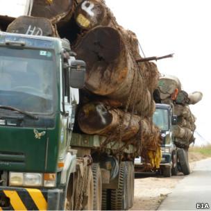 Vận chuyển gỗ sang Việt Nam