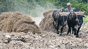 Trabajo en el campo. Foto: Raquel Pérez