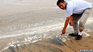 唐山乐亭县水产养殖协会会长杨基珍在浪窝口一处海滩向记者展示油污(新华社图片25/7/2011)