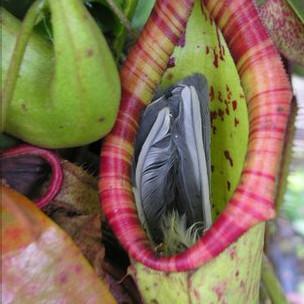 Planta carnívora de Somerset, após ter aprisionado ave (BBC)