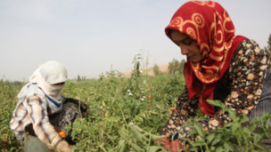 Дети собирают помидоры и наполняют контейнеры питьевой водой