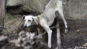 Perro abandonado. Archivo