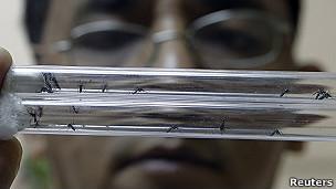 Dengue / Reuters