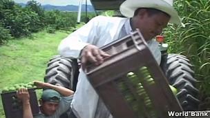Cultivo de frutas en América Latina