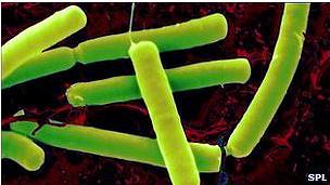 بكتيريا ضد السرطان