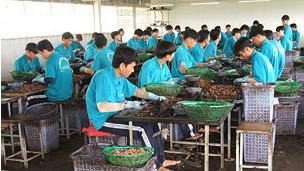 Học viên Trung tâm Giáo dục lao động xã hội Phước Bình tách hạt điều