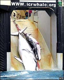 Una ballena y su cría en un buque de caza japonés