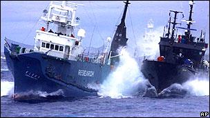 Buque japonés No. 3 Yushin Maru se enfrenta a la embarcación Bob Barker de Sea Shepherd en febrero de 2010.
