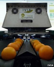 Máquina que selecciona las naranjas. Cortesía: IVIA