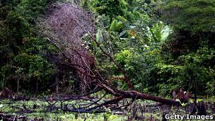 El bosque tropical africano, más resistente al cambio climático 111026135221_rainforest_one_304x171_gettyimages