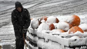 南瓜覆盖着白雪