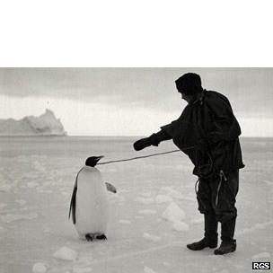 Pingüino emperador llevado por uno del equipo de Scott.