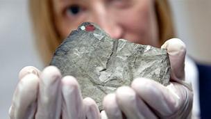 Fósil de Glossopteris