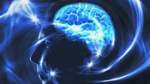 مقطع للدماغ