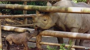 Носороги в Африке