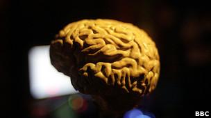 Cérebro humano (BBC)