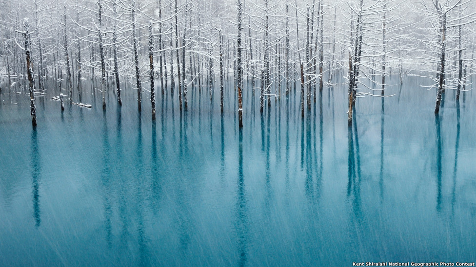 Foto: Kent Shiraishi / National Geographic Photography Contest