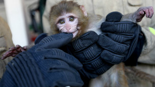 میمونی که در ایستگاه اتوبوسی در تهران پیدا شد