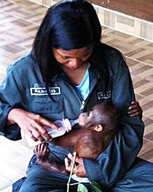 Rosa con la bebé orangután Elaine