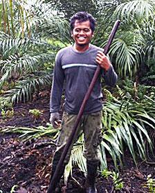 Ronal, trabajador de una plantación en Indonesia